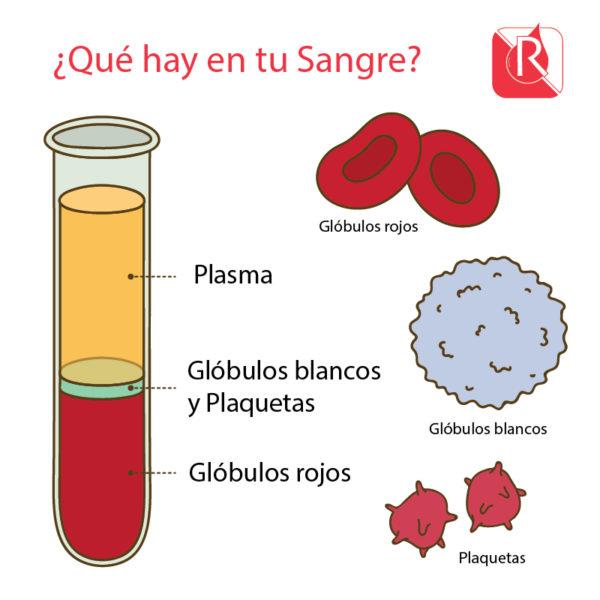Componentes de la sangre - Referencia Banco de Sangre